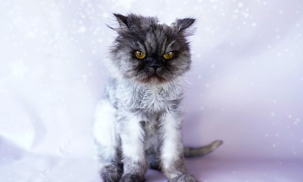 5 Cool Kitties To Adopt Now In Orlando Pet Adoption Center Adoption Pet Adoption