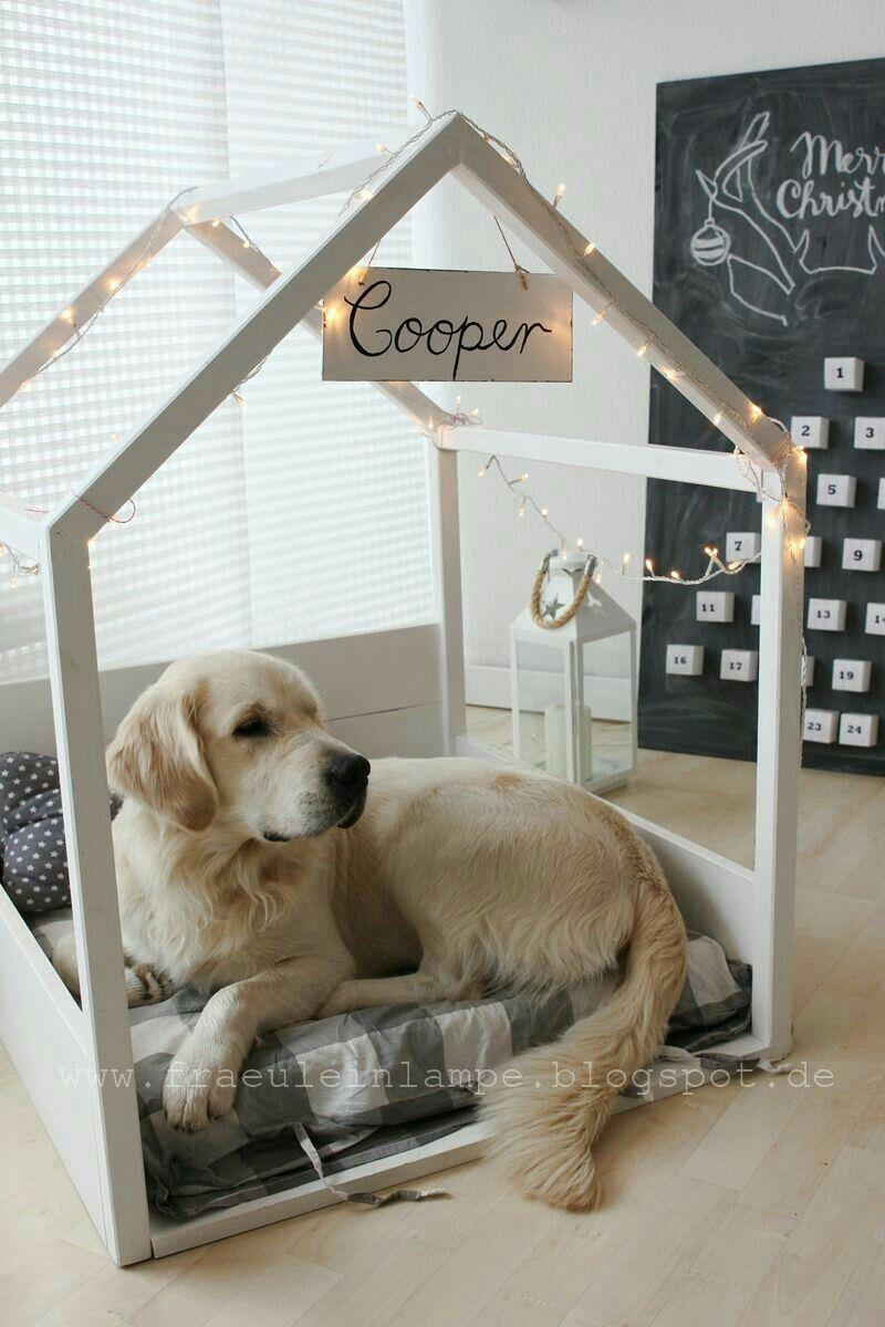 Pin On Dog Room Ideas