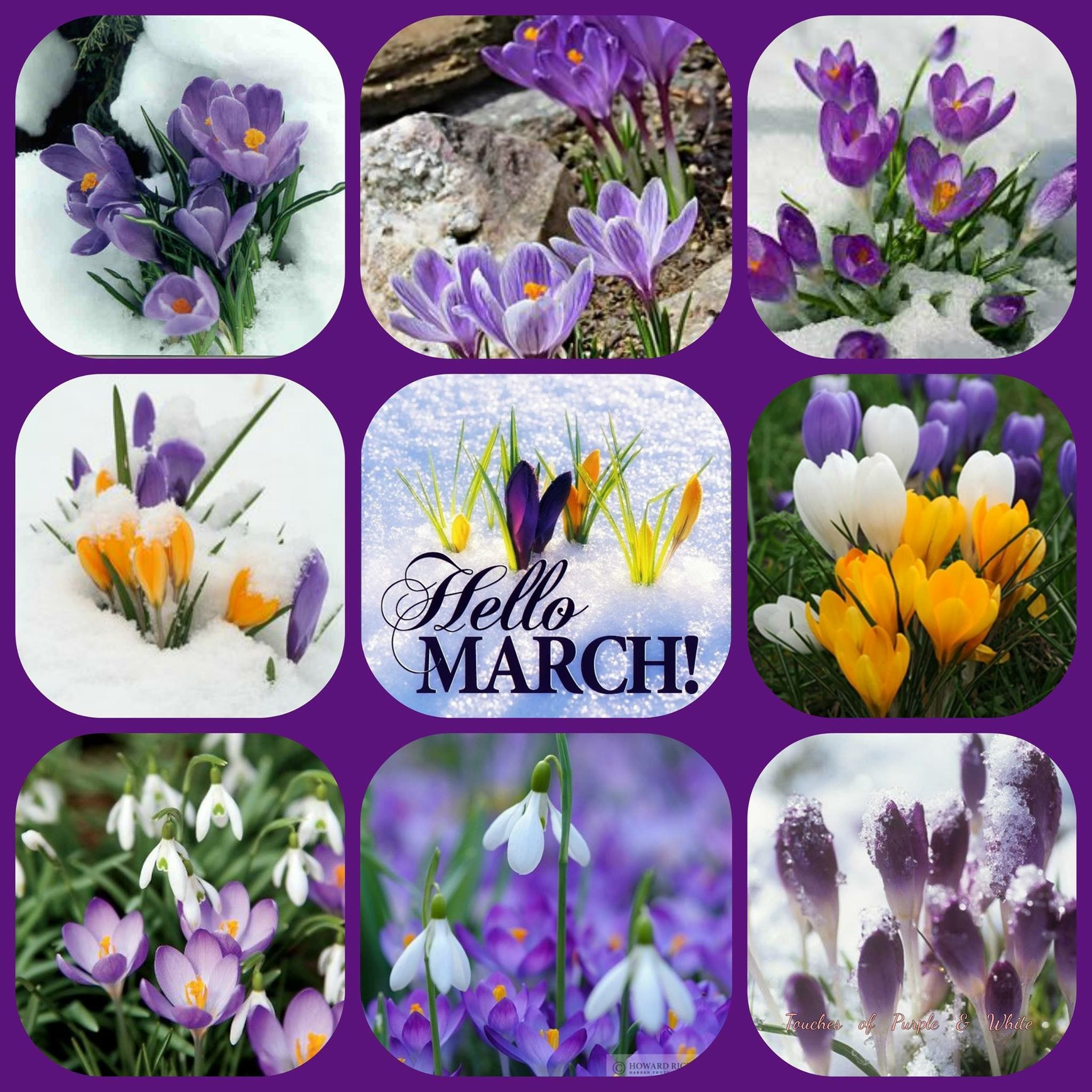 Pin By Gigi Pietri On Months Of The Year Birthday Quotes For Me Hello March Birthday Quotes