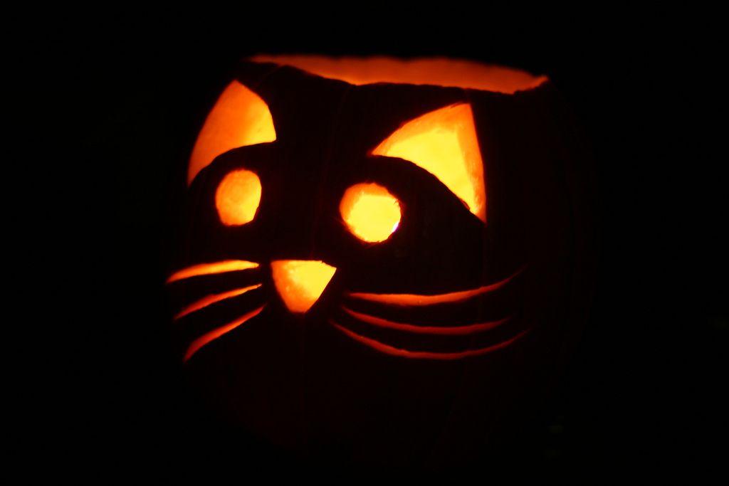 Kitty Jack O Lantern Halloween Pumpkins Carvings Pumpkin Carving Cat Pumpkin Carving