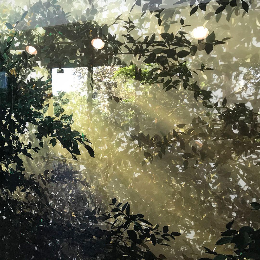 Studio Olafur Eliasson On Instagram Fakenature Thomas Demand