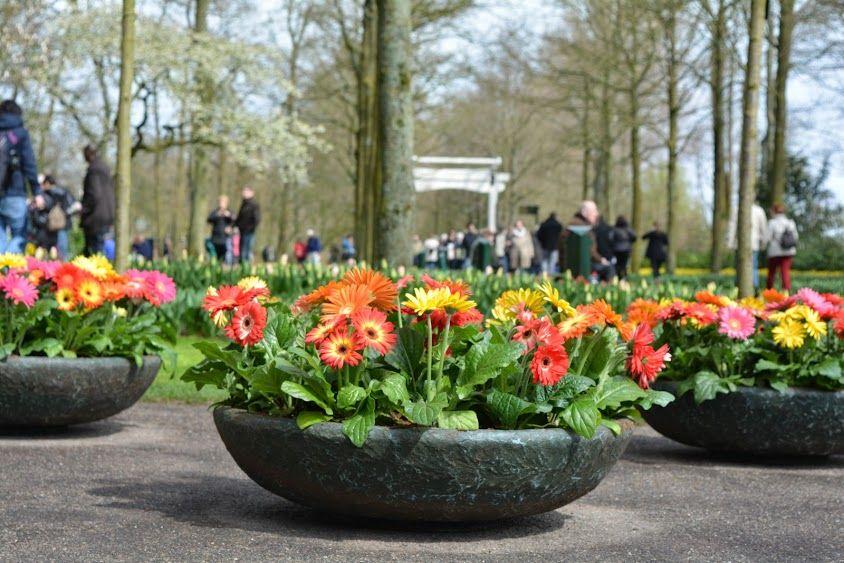 Tupil Garden,Amsterdam