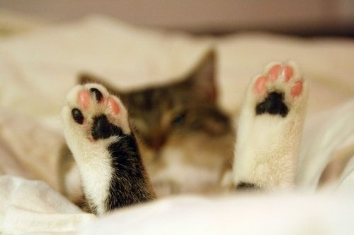 animals, cat, cute, funny, paw, paws