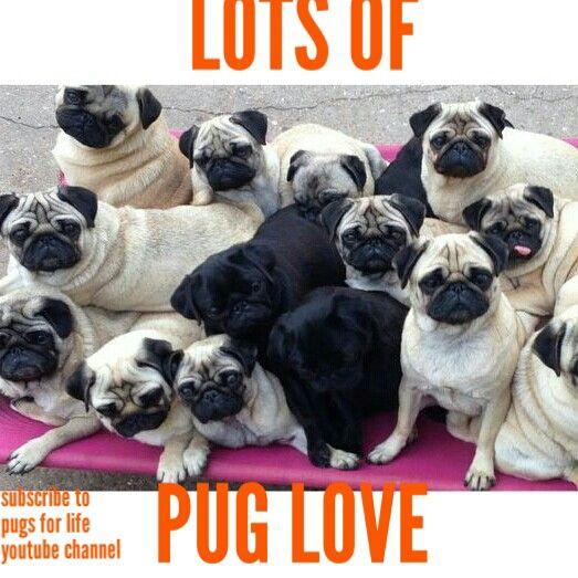Lots Of Love Pugs Dogs Retweet Pug Follow Like Puglife Dog