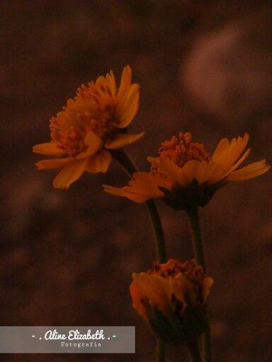 """""""Podrán cortar todas las flores, pero no podrán deterner la primavera"""" Neruda"""