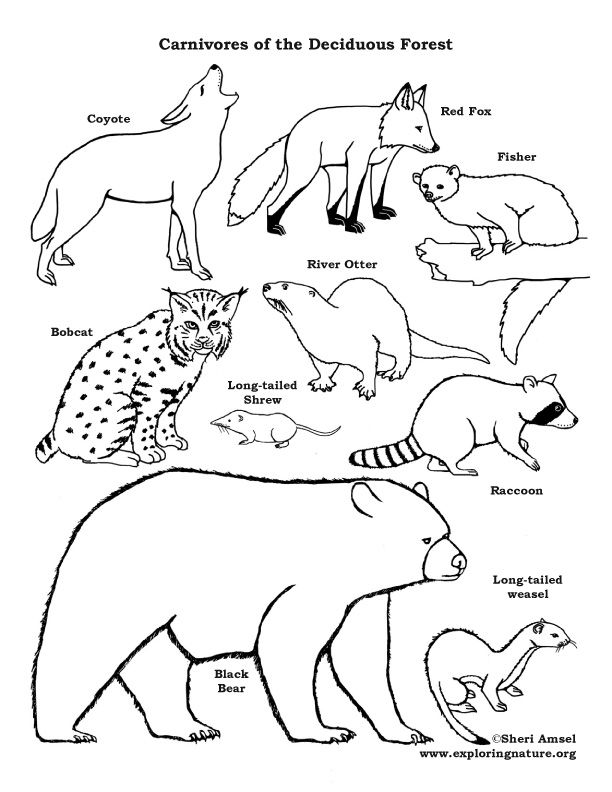 Wild jungle color and black contour line drawing for coloring on a white background. Color Animals On Exploringnature Org Forest Coloring Pages Color Worksheets Coloring Pages
