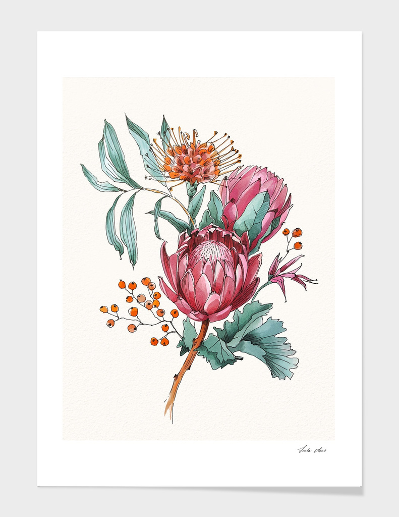 «King protea flowers watercolor illustration» Art Print by 2lips - Exclusive Edition from $24.9 | Curioos