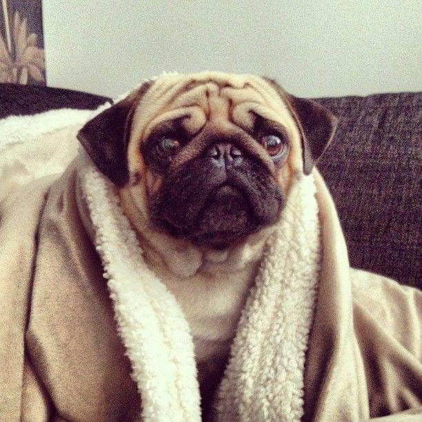 Sunday Morning Cuddly Pug Pugs Instagram Posts Instagram