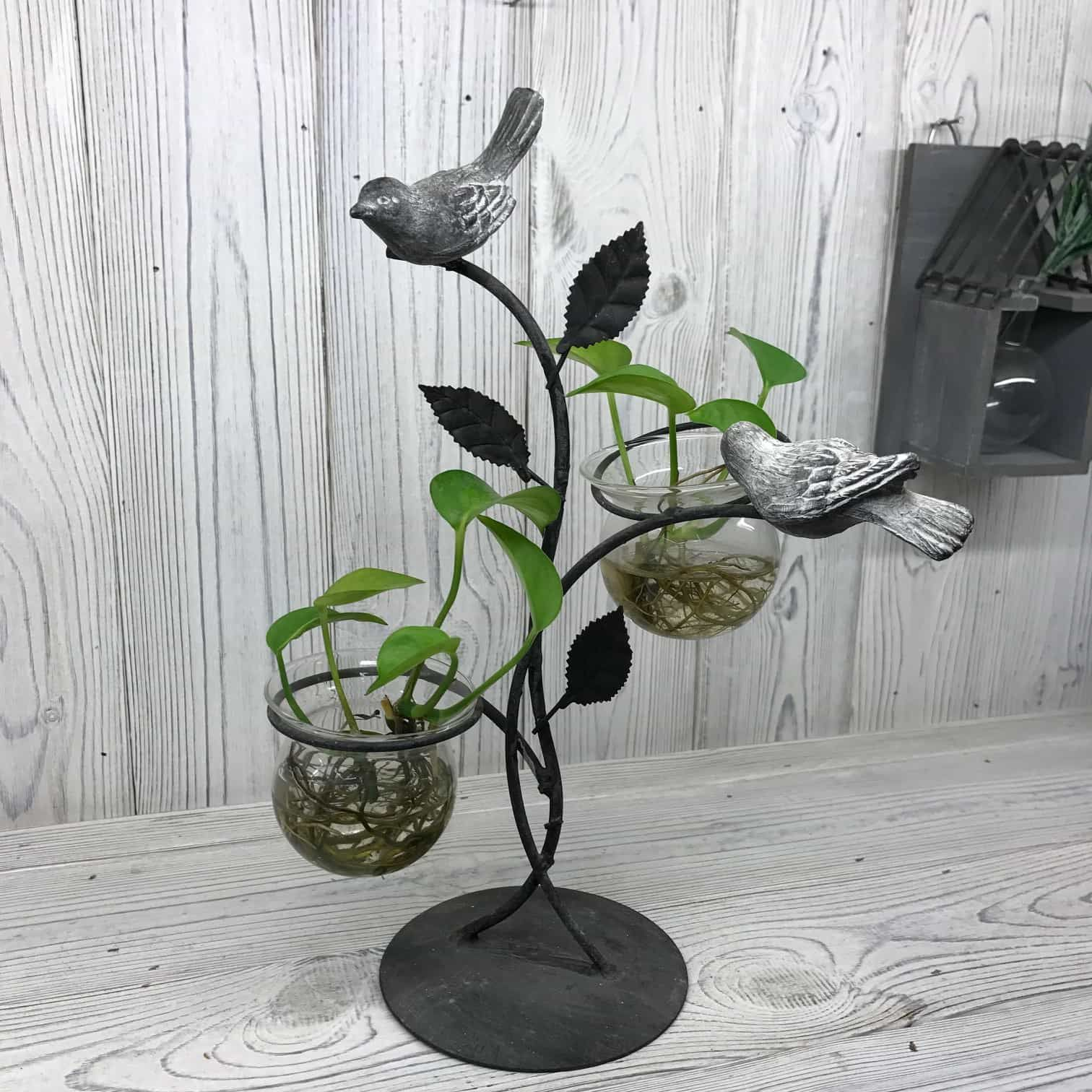 feng shui plants for office. Feng Shui · Hydroponic Vases Two Birds Design Set On A Recycled Metal Stand. Office Plants. Houseplants Plants For V