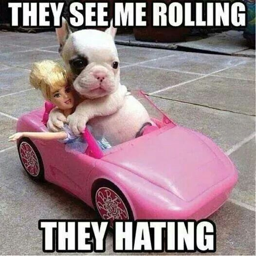 This is how this sweet little doggie rolls! :) Lol!