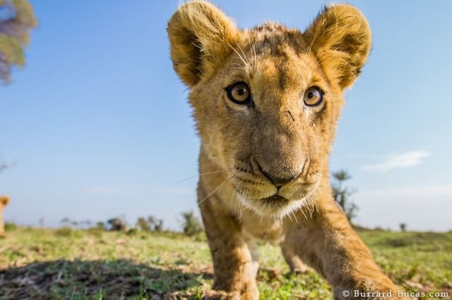 How to Get the Shot: 9 Tips From Wildlife Photographers