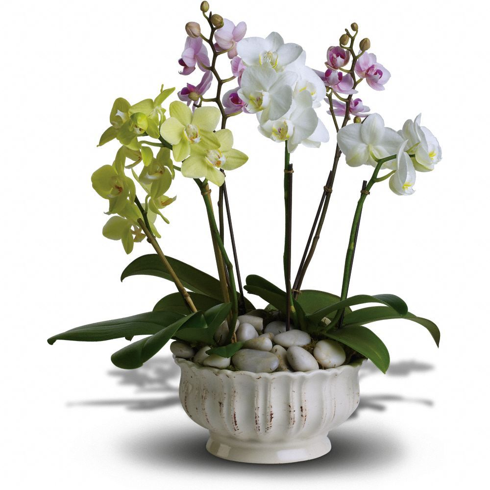 Best Realtor Closing Gifts Over 100 00 Realestateclientgifts Com Orchid Flower Arrangements Orchid Plants Plants
