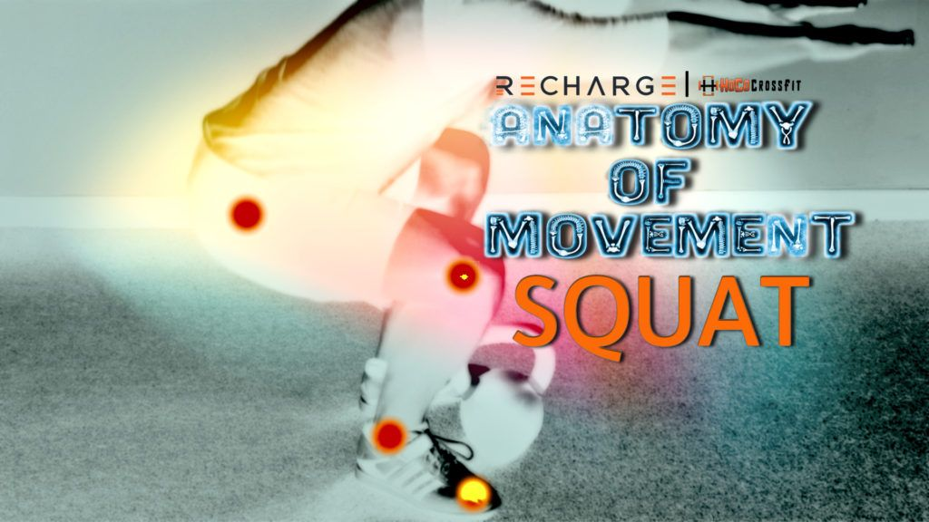 Anatomy of Movement: Squat Squatting is often considered the holy ...