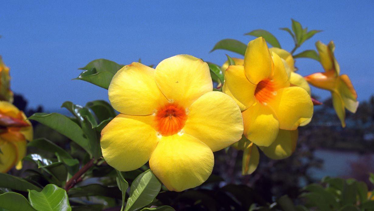 Fabuloso Lista de Nomes de Flores | Lista de nomes de flores, Lista de  JS06