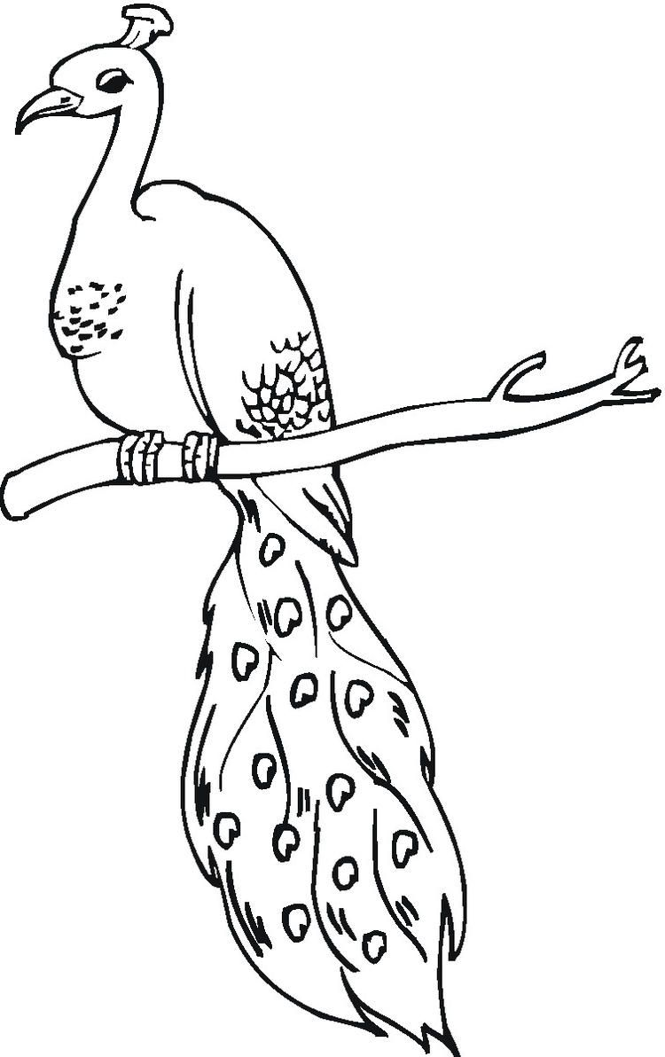 Peacock Coloring Pages On Tree Branch Peacock Coloring Pages Turtle Coloring Pages Fall Coloring Pages