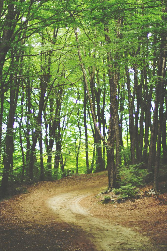 Forest road by Maria Dattola Photography on Creative Market