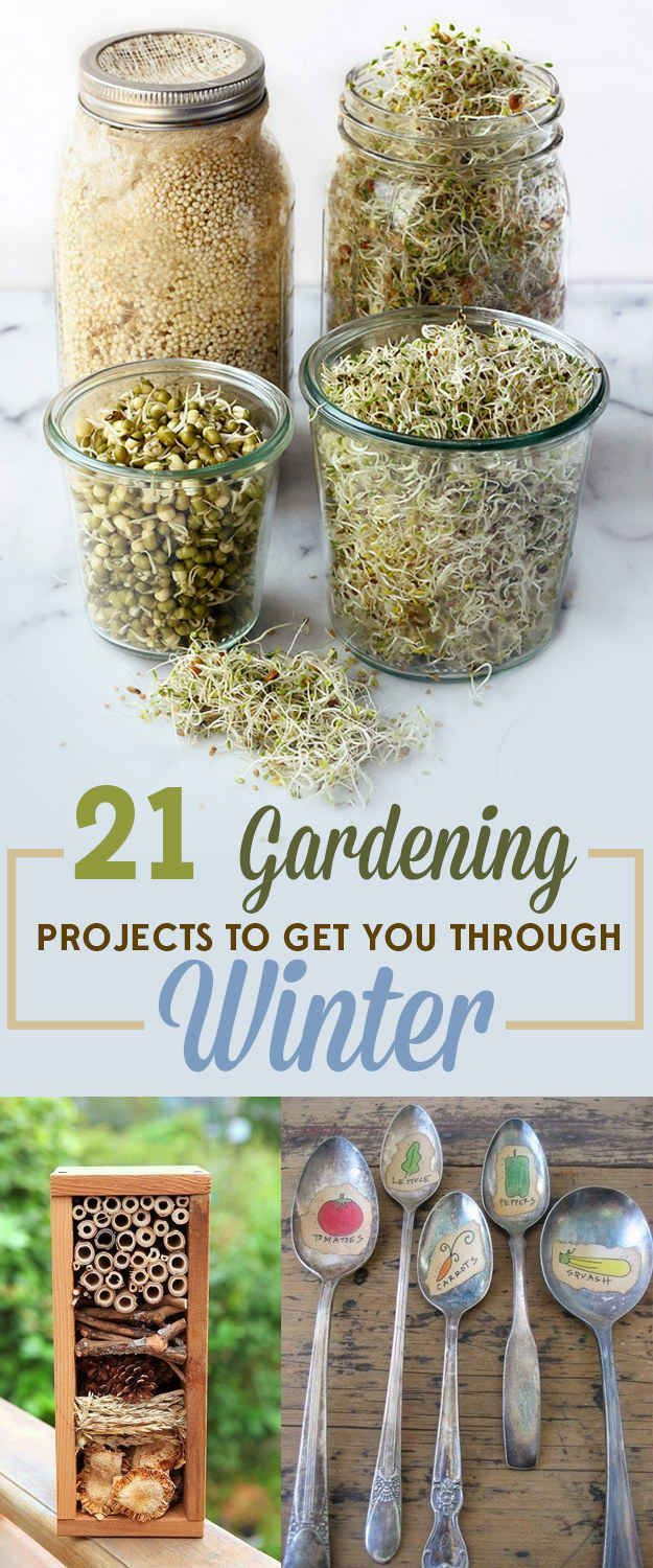 21 gardening projects to get you through winter homestead