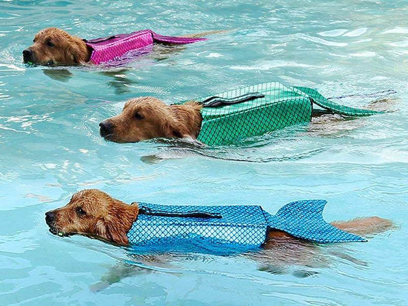 Amazon Has A Life Jacket For Dogs That Make Them Look Like Mermaids Dog Life Vest Dog Swimming Dog Life