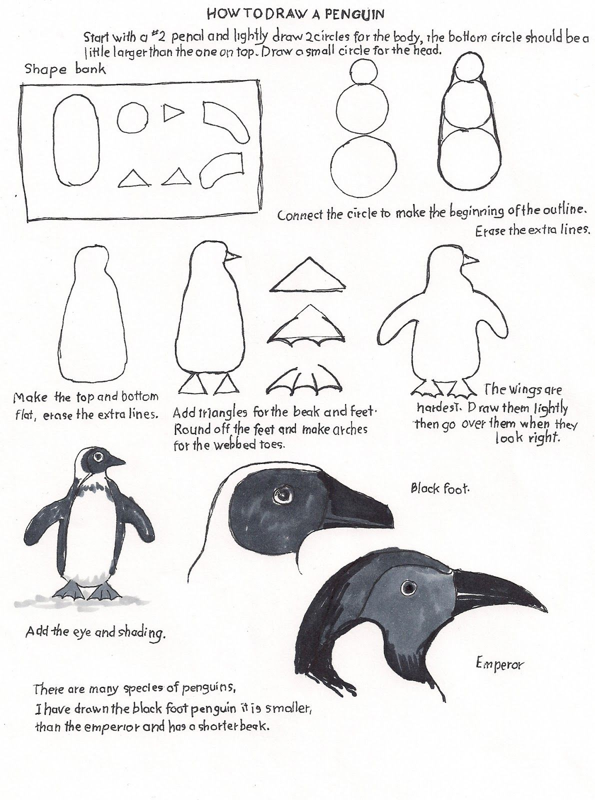 How To Draw Worksheets For The Young Artist How To Draw A Penguin For The Young Artist