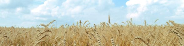 10 very good reasons to go grain-free.  Jeff and I have been doing this for almost a year.