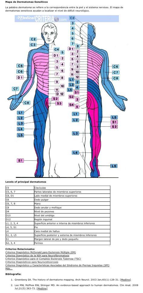 Dermatomas sensitivos | Urgencias médicas EM Emergency medicine ...