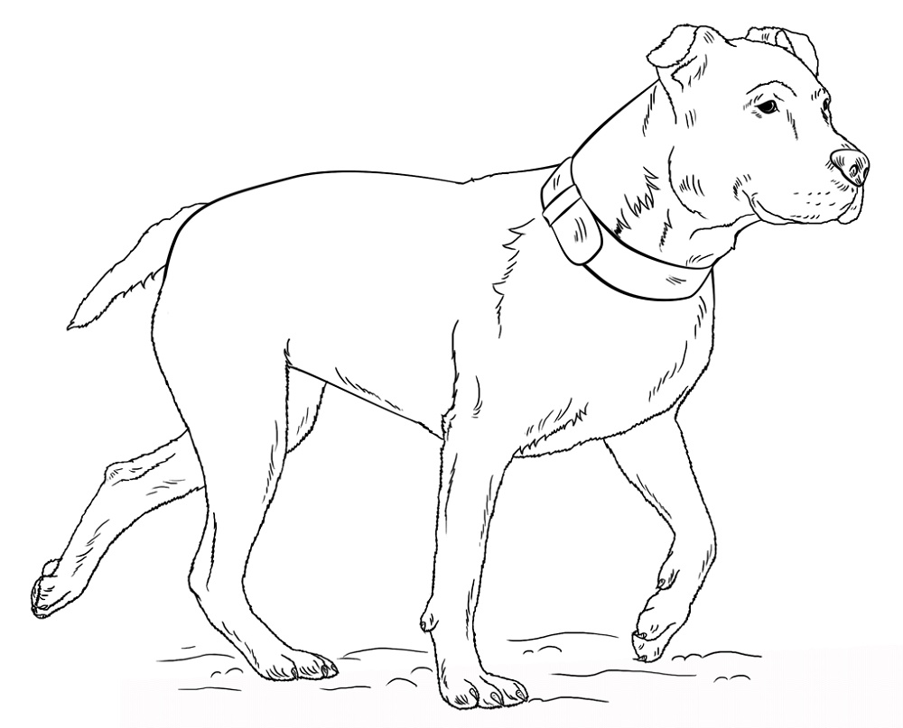 Pitbull Coloring Pages Free Download in 2020   Pitbull ...