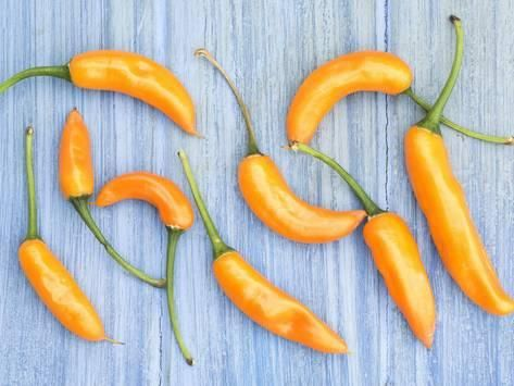 Photographic Print: Yellow Chilli Peppers Chillies Freshly