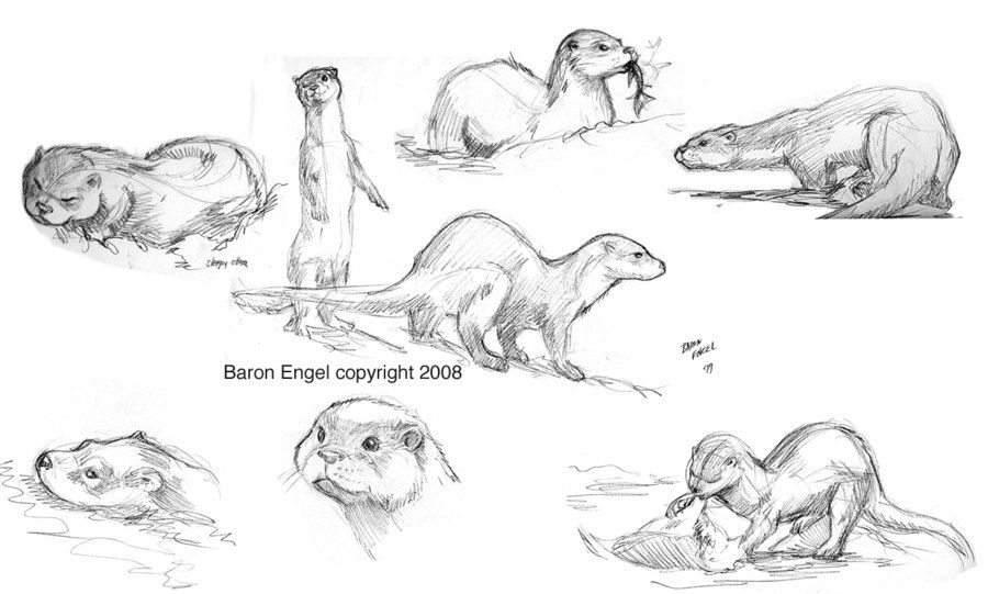 how to draw otters - Google Search | art...otters | Pinterest