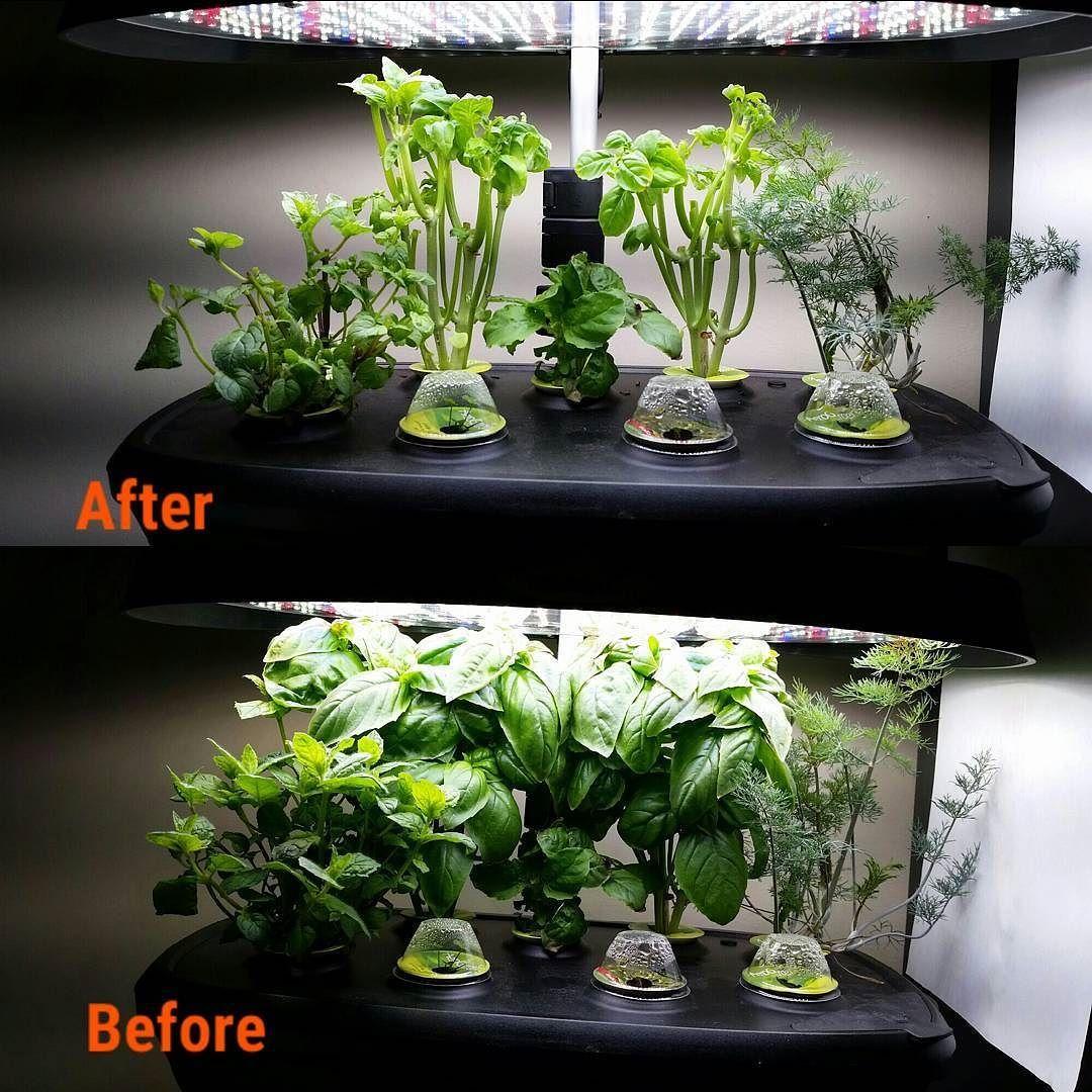 Hydroponics Herb Garden Kitchen Heavy Duty Herbal Pruning Gardening Aeroponics Aerogarden