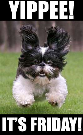Adorable Dog Happy Friday We Are The Puppys Dogs Cute Dogs