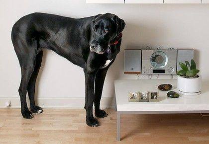 Let S Hear It For Apartment Pets Dog Breeds Apartment Pet Dogs