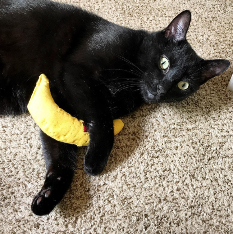 These Catnip Toys Are Perfect For Cats Who Are Tired Of The Same Old Plastic Balls And Cheap Mouse Toys And Who Love To Hug An Pet Toys French Cats Catnip