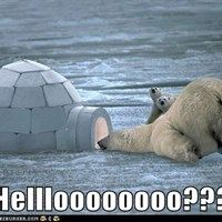adorable polar bears