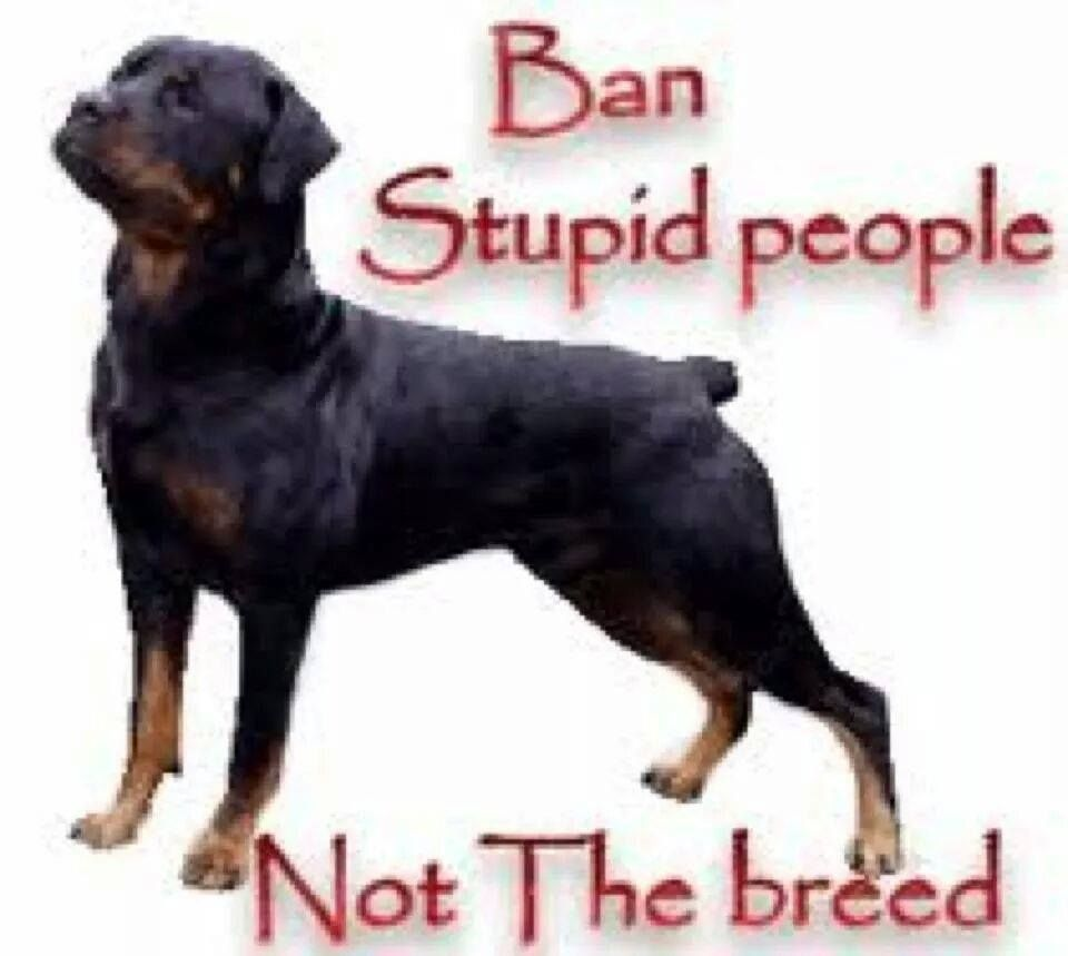 Pin By Pj Brown On Rottweilers The Ultimate Furbaby Rottweiler