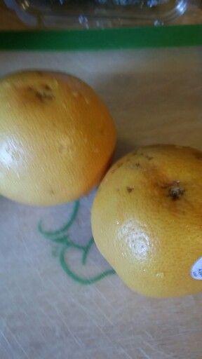Day 19 juice 3:  2 grapefruit.  Made 16 oz.  #Gigi 40 day juice fast