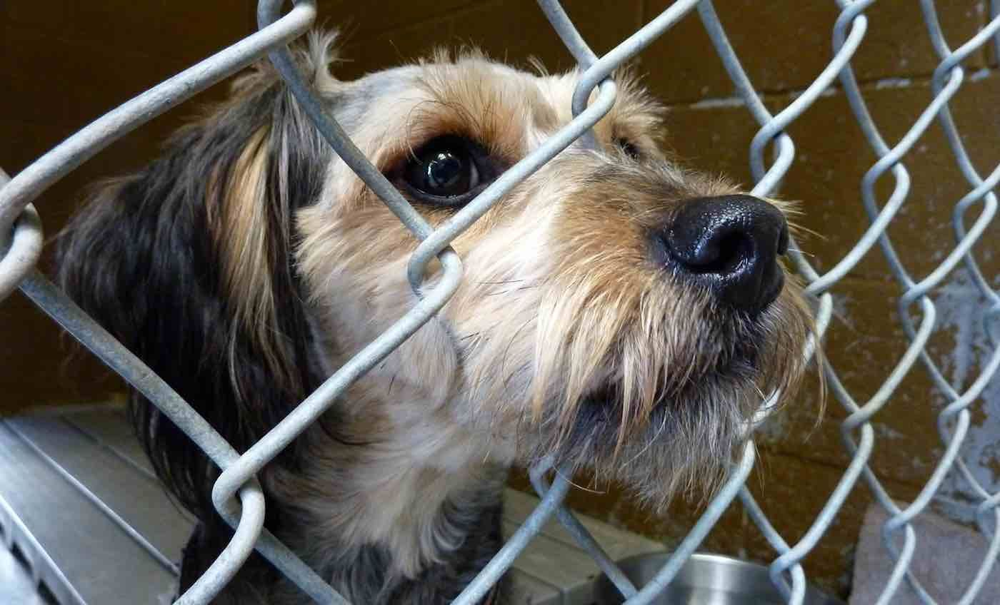 Another Us State Has Just Made Shelter Pets Their Official State Animal Animal Shelter Shelter Dogs Animals