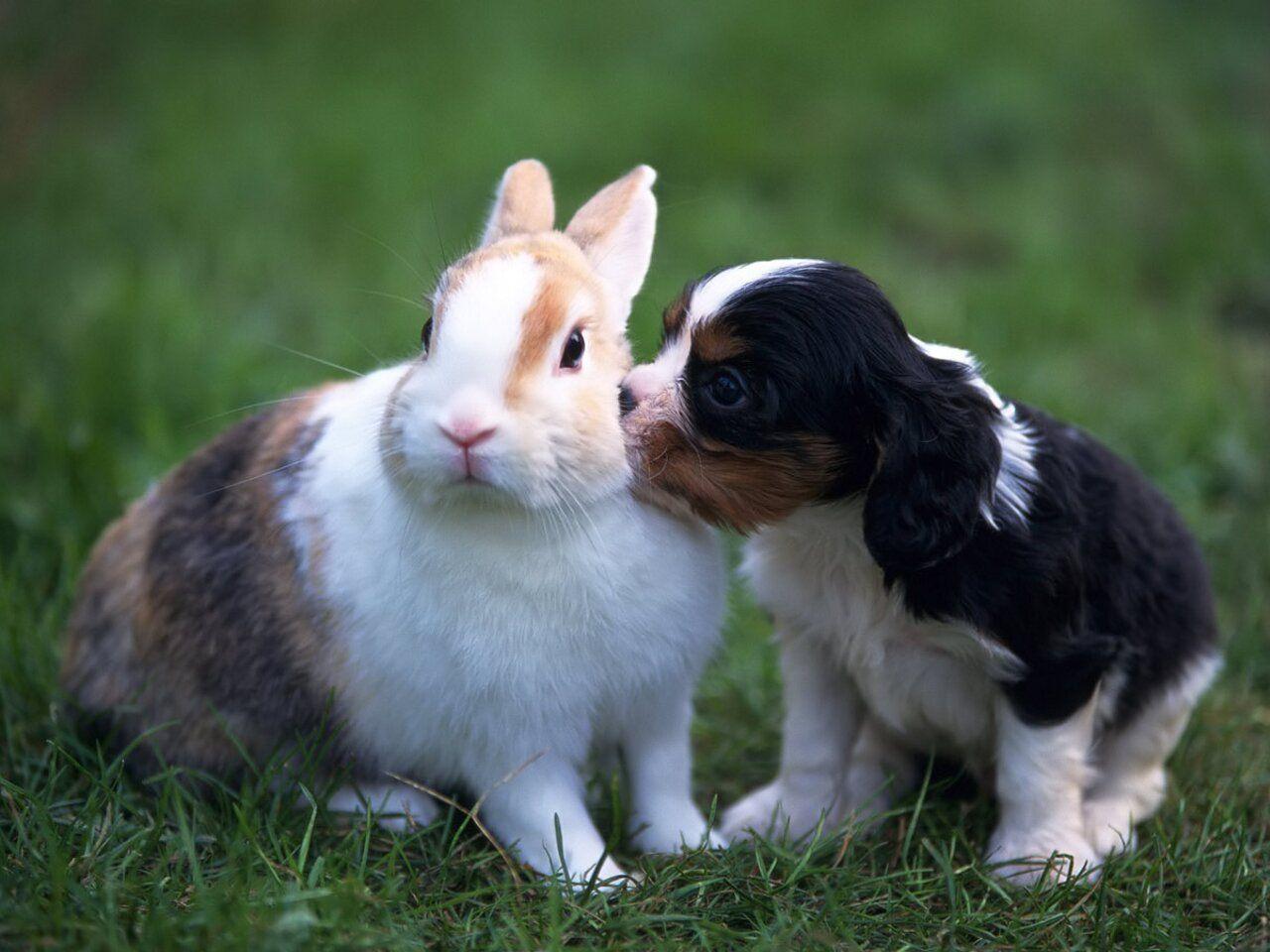 Too Cute Animals Friends King Charles Cavalier Spaniel Puppy
