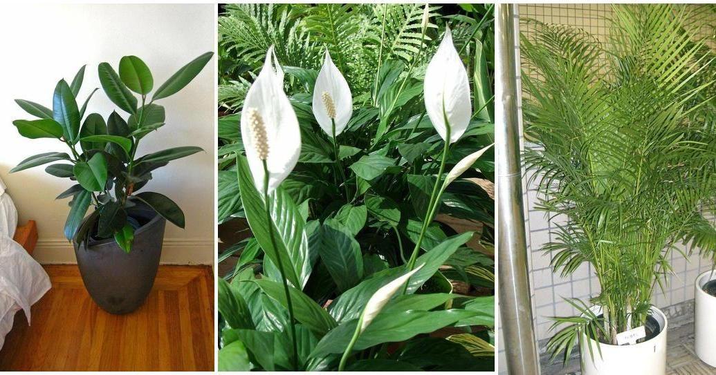 Estas son las 5 mejores plantas de interior para limpiar for Cuales son las plantas para interiores