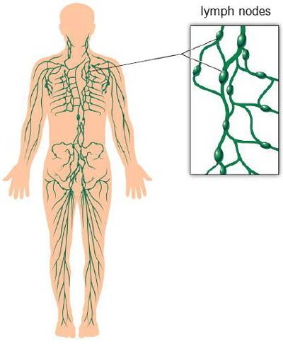 Lymphedema Occupational Therapy Pinterest Lymphatic System