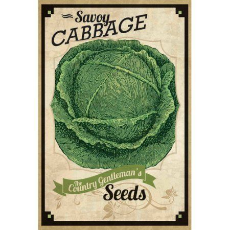 Marmont Hill Seed Packet Cabbage Painting Print on Canvas, Size: 24 inch x 36 inch, Multicolor