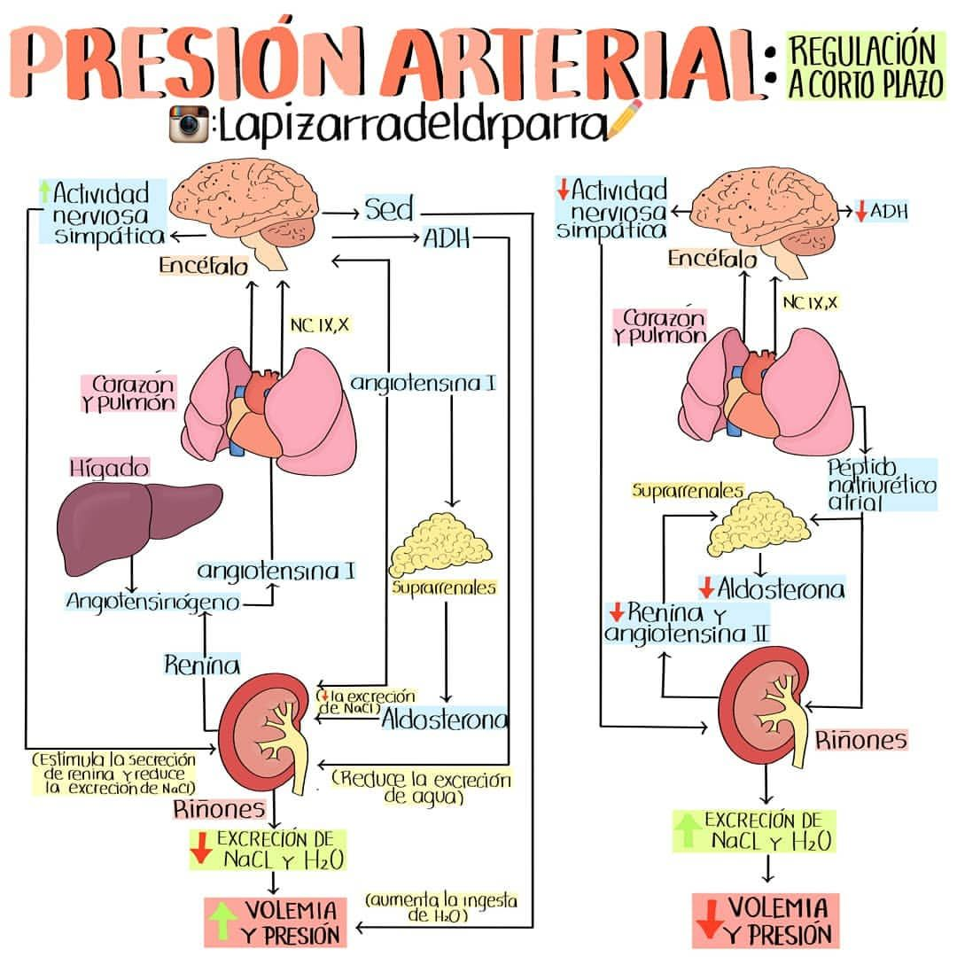 Causas de la presión arterial alta extrema repentina