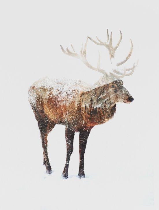 Arctic Deer Art Print By Andreas Lie Society6 Nature Art Prints Deer Art Print Art