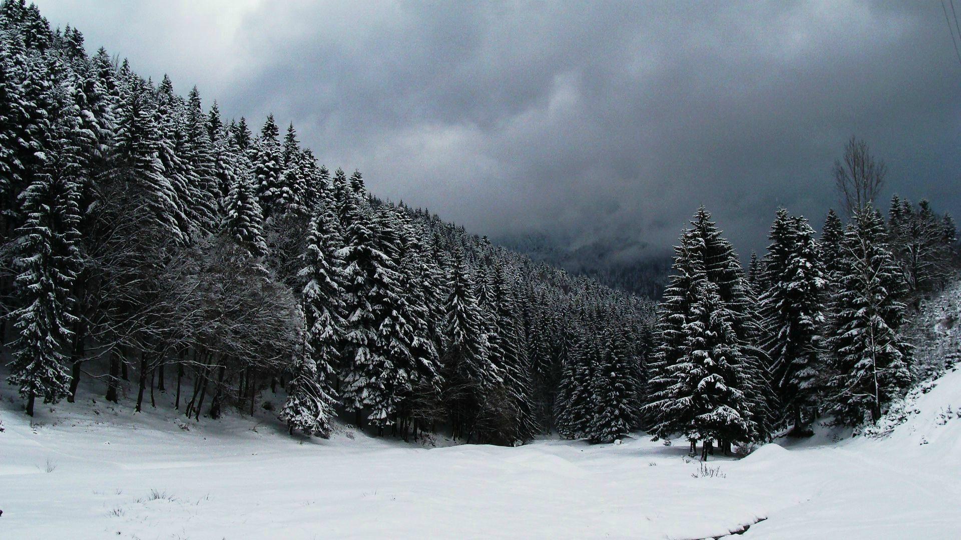 Resultado de imagen de snow forest Snow forest, Forest