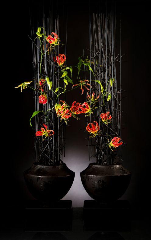 Gloriosa 'Tomas De Bruyne'  (www.tomasdebruyne.com)