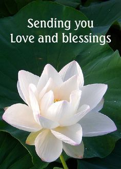 Love you have a beautiful day sweet twin flame love you have a beautiful day sweet twin flamesoulmate pinterest flowers lotus and white lotus flower mightylinksfo