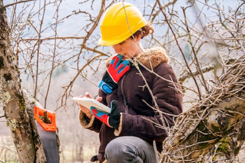 Want to hire a certified arborist Cincinnati Ohio and