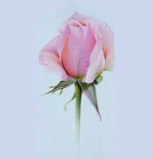 Amazing talent pink rose in color pencil drawings for Amazing drawings of roses