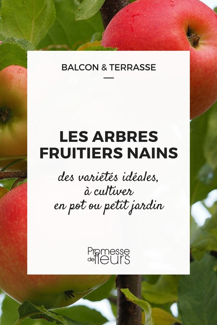 Comment Planter Un Arbre Fruitier Épinglé sur promesses de fleurs