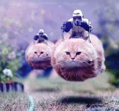 Kitties And Star Wars Perfect Happy Star Wars Day Star Wars Puns Funny Star Wars Memes