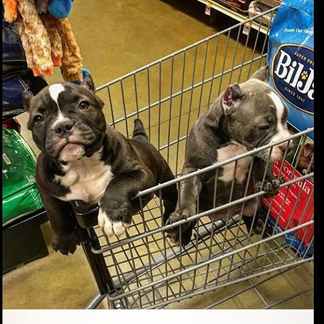 Another Petsmart Run Instagram Instagram Posts Animals